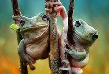 Me Froggy!