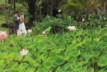 Hawaii | REEL Weddings / Photos are nice but videos are more fun. / by Moana Events