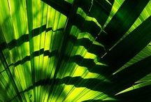 Palm Green / Introducing our new colour for the season!  Palm Green