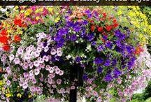 garden ideas / by Betty Wilson