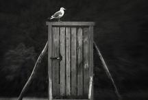Puertas - Doors / by Susana Munay