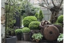 Garden Delights / Plants and their environments