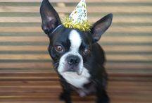 Birthday Parties / by Chrissy Trujillo