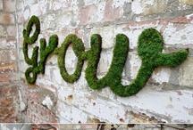 how does your garden grow / by Jennephyr Meier