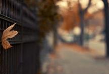 Fall / by Amy Petit