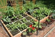 Square foot gardening/vegetable gardens / by Beth Holmes