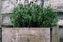 Garden, Patio, Flowers & Plants