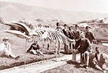 Explorers and Scientists of NZ / New Zealand / Aotearoa early explorers through to present day natural scientists. Botanists, geologists, zoologists and more.