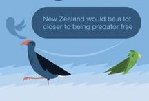 Predator Free NZ / Can we aspire to a predator free New Zealand? Where introduced predators (and pests such as invasive weeds) are no longer endangering our native wildlife. Because we have so many unique species here, the loss of every New Zealand species is a blow to the world's biodiversity.