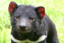 Australian Nature / Australian native animals and plants, books, websites, conservation activities.
