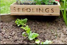 Spring Garden / Spring garden plants and tasks