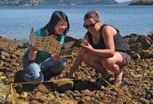 Citizen Science Projects / Inspiring Citizen Science projects in New Zealand and around the world, how ordinary people (and children) can contribute to science knowledge and ultimately to conservation.