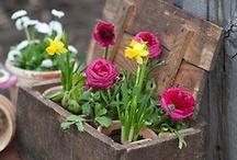 Garden Planters / by Lisa Donigian