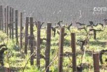 Video Indecom' Prod / Les vidéos que nous avons produit pour le monde viticole avec Marie Houlonne