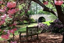 Gorgeous Gardens / by Tanya Villanueva