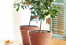Grow things!!! / by Amanda Winter