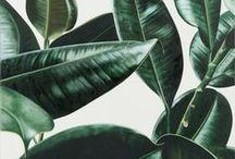 Woonstijl: botanisch / Je omringt je graag met planten en je houdt van natuurlijke materialen als hout, kurk, riet en rotan. De materialen en plantenprints geven je interieur een botanisch retro-gevoel.
