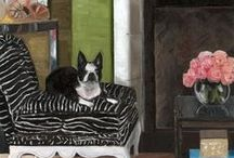 Cats & Dogs in paintings / by Cara Alex White