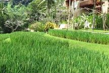 BALI / What to EAT, where to SLEEP and what we LOVED about our visit to Bali. Direct flight from Dubai 9 hours. Luxury end of things mostly...