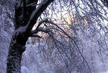 Art: Winter / by PELO DE HAWKEYE