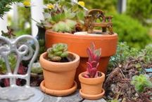 Miniature Gardening / http://www.TwoGreenThumbs.com