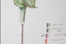 Botanical Art, Illustration, and Inspiration