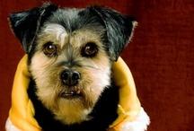 Rocky / Lo adoptamos el 21 de Enero de 2010 y revolucionó la casa.