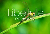 とんぼ/libellule/蜻蜓