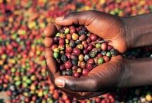 The Foods of Uganda