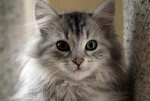 Oh wait! #animals #pets #cats