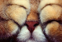 Cats, gotta love them!