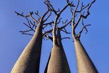 Trees/shrubs/form