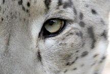 white & albino / animals
