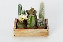 plantitas / cactus, cactus, cactus y otros verdes :)