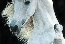 Horses / by Ella