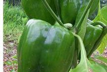gardening - veggies / by MaryAnn Stark