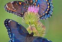 Beautiful Birds & Butterflies!