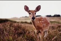 """Oh Deer! / """" The colder the winter, The warmer the spring. The deeper the sorrow, the more our hearts sing"""". -  Bambi  / by Jo Moore"""