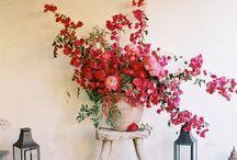 Växter / allt som växer är bra