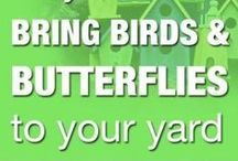 BEES, BIRDS AND BUTTERFLIES (and sometimes BATs)- NATURES THREE Bs / Without these creatures our natural ecosystem will collapse.  Help build nesting houses and habitats for these special creatures.   Write me to join: kurt@rollingplanter.com