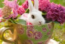 Easter ~ Spring has sprung! / Easter & Spring things / by Denise Mattern-Morton