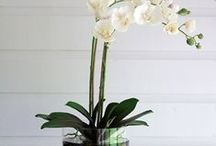 NDI Floral Installations