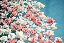 Petal Pusher / by NDI | Natural Decorations, Inc.
