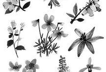 Floral / by Sarah Weston