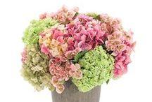 NDI.com FOM / NDI Flower of the Month | July = Hydrangea / by NDI | Natural Decorations, Inc.