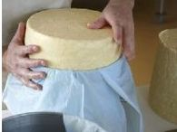 Hafod Cheese on The Artisan Food Trail / Hafod is a traditional hard cheese handmade using the raw (unpasteurised) milk from 65 Ayrshire cows. The cheese is matured for 12 months and has rich, buttery, nutty flavour.