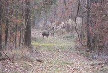 My Deer Pictures