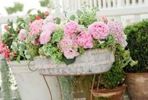 Garden and Backyard dreams inspired by Grandma Barbara / Garden inspired by Grandma Barbara F