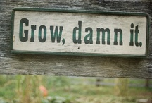 How does your garden grow? / by Callie Rhodes