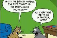 Cats - LOL / Funny Cats